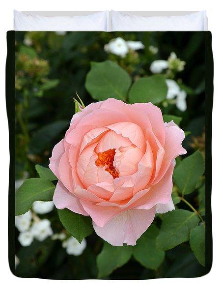 Pink Rose In Hamburg Planten Und Blomen Duvet Cover by Eva Kaufman