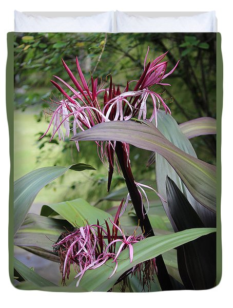 Pink Spider Lily Crinum Duvet Cover by Venetia Featherstone-Witty