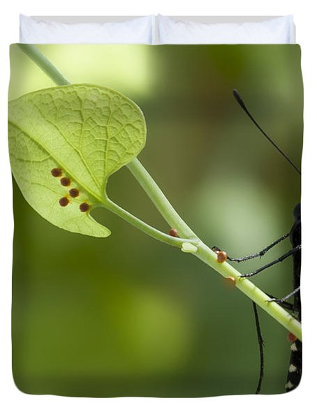 Duvet Cover featuring the photograph Pipevine Swallowtail Mother With Eggs by Meg Rousher