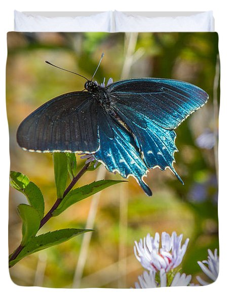 Pipevine Swallowtail On Asters Duvet Cover by John Haldane