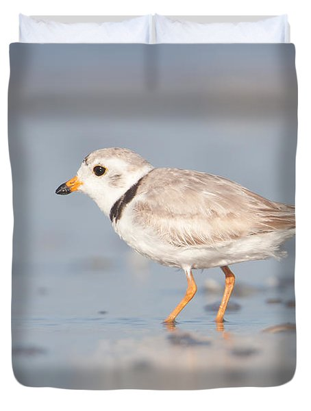 Piping Plover II Duvet Cover by Clarence Holmes