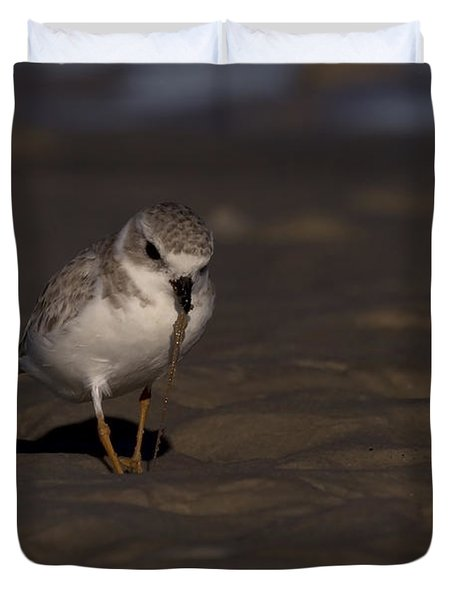 Piping Plover Photo Duvet Cover