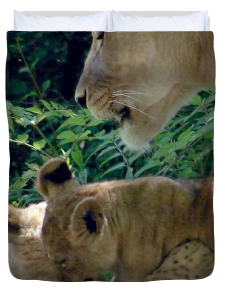 Playful Cubs Duvet Cover