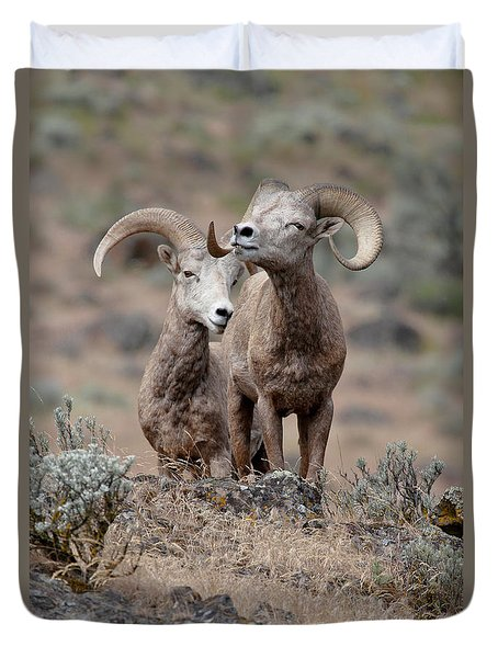 Playfull Rams Duvet Cover by Athena Mckinzie