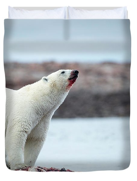 Polar Bears Feeding On Harbour Islands Duvet Cover