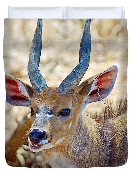 Portrait Of A Bushbuck In Kruger National Park-south Africa  Duvet Cover