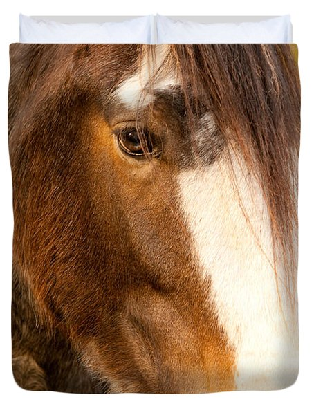Portrait Of A Clydesdale Duvet Cover