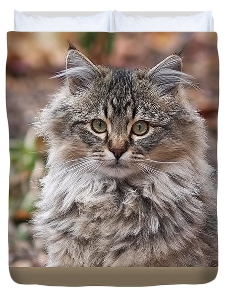 Portrait Of A Maine Coon Kitten Duvet Cover by Rona Black