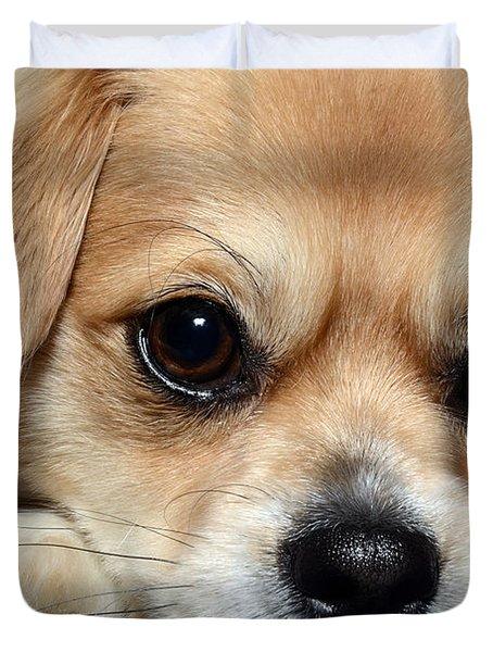 Portrait Of A Pup Duvet Cover by Lisa Knechtel