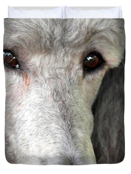 Portrait Of A Silver Poodle Duvet Cover