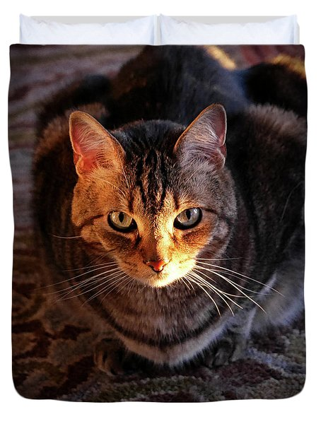 Portrait Of A Tabby Cat With Sunlight Duvet Cover