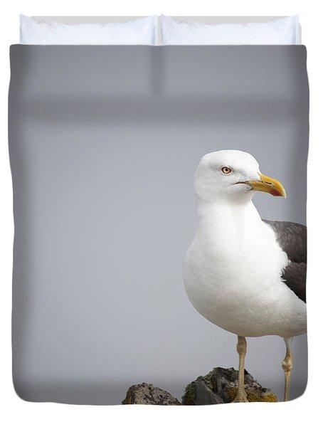 Posed Gull Duvet Cover by Anne Gilbert
