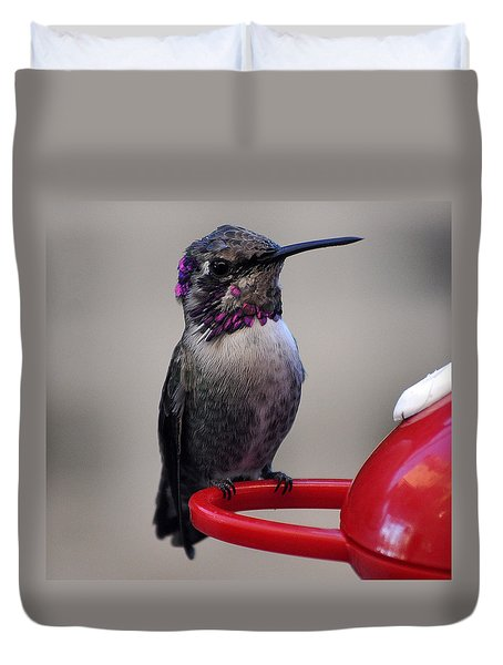 Duvet Cover featuring the photograph Posing Juvenile Hummingbird Anna by Jay Milo