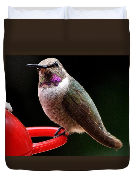 Duvet Cover featuring the photograph Pregnant Female Caliope With Purple Throat by Jay Milo