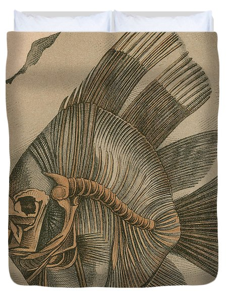 Prehistoric Fish Platax Altissimus Duvet Cover by Science Source