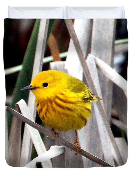 Pretty Little Yellow Warbler Duvet Cover by Elizabeth Winter