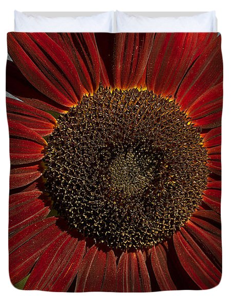 Primitive Sunflower 2 Duvet Cover