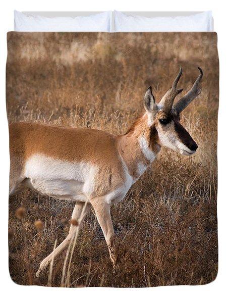 Pronghorn Antelope 2 Duvet Cover by Vivian Christopher