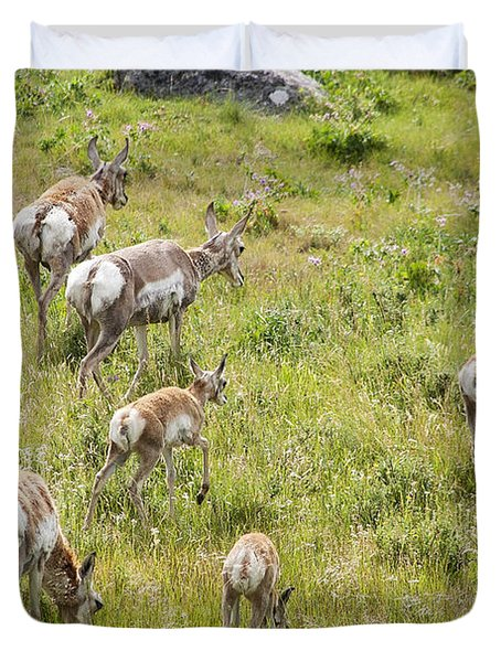 Pronghorn Antelope In Lamar Valley Duvet Cover by Belinda Greb