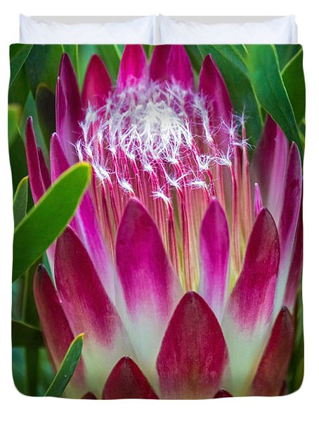 Duvet Cover featuring the photograph Protea In Pink by Kate Brown