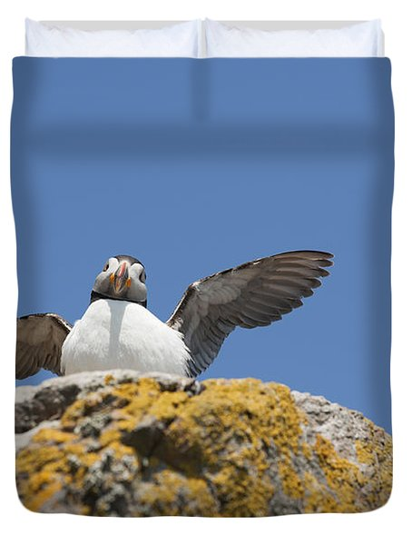 Puffed Up Puffin Duvet Cover by Anne Gilbert