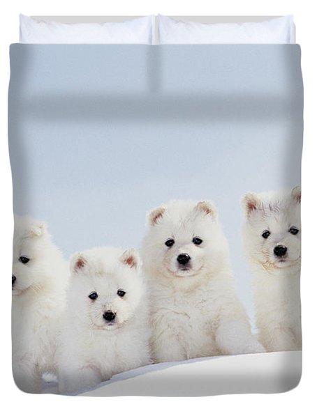 Puppies In Snow Duvet Cover by Mitsuyoshi  Tatematsu