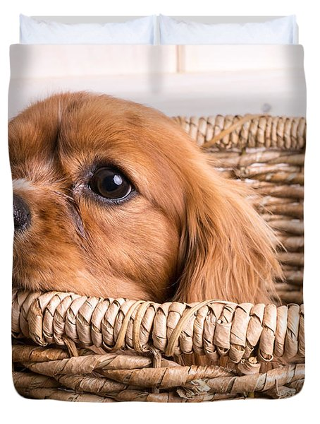 Puppy In A Laundry Basket Duvet Cover by Edward Fielding
