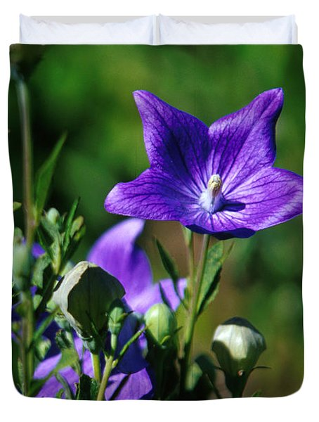 Purple Balloon Flower Duvet Cover by Anonymous