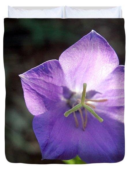 Purple Balloon Flower In Bloom Duvet Cover by Kenny Glotfelty