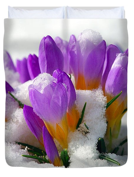 Purple Crocuses In The Snow Duvet Cover