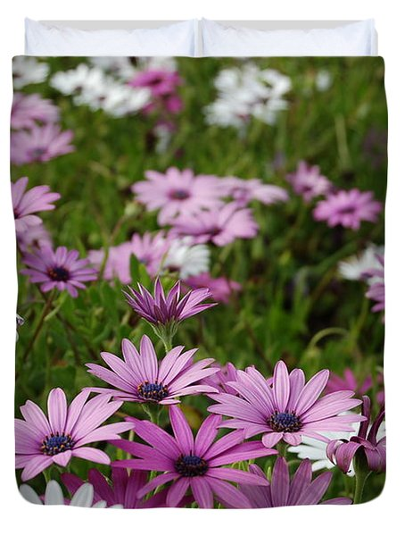 Purple African Daisies  Duvet Cover