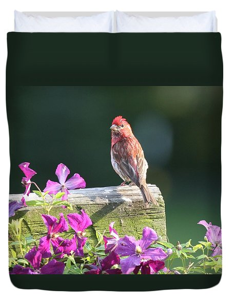 Purple Finch By Clematis Duvet Cover