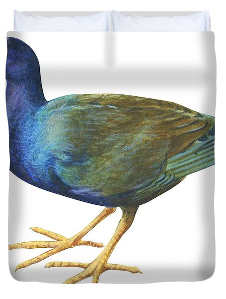Purple Gallinule Duvet Cover by Anonymous