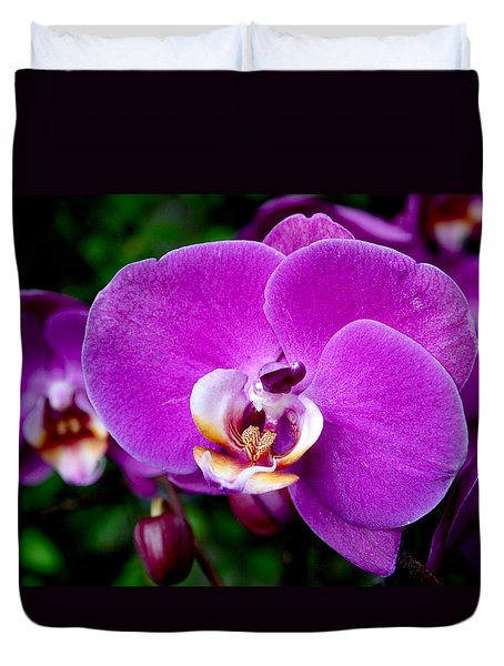 Purple Orchid Duvet Cover by Rona Black