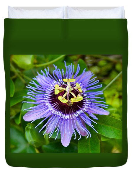 Purple Passion Flower Duvet Cover by Venetia Featherstone-Witty