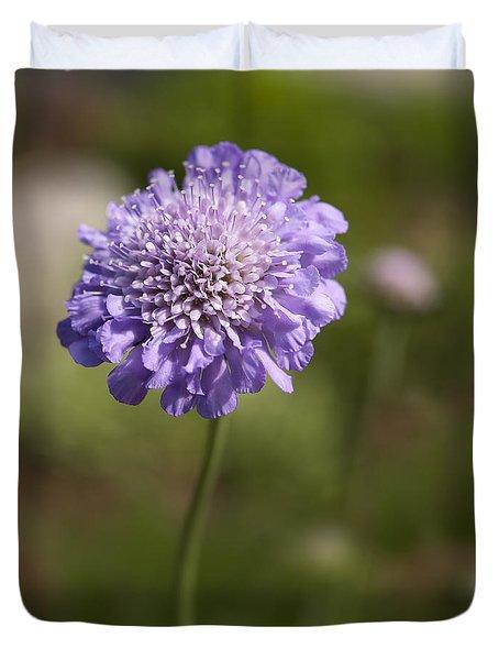 Purple Scabious Columbaria Duvet Cover by Tony Cordoza