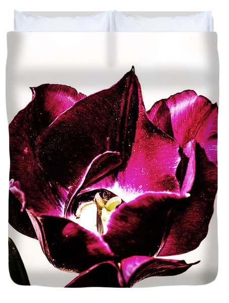 Duvet Cover featuring the photograph Purple Tulip by Angela DeFrias