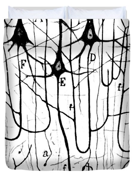 Pyramidal Cells Illustrated By Cajal Duvet Cover
