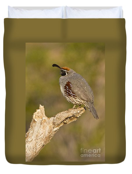 Duvet Cover featuring the photograph Quail On A Stick by Bryan Keil