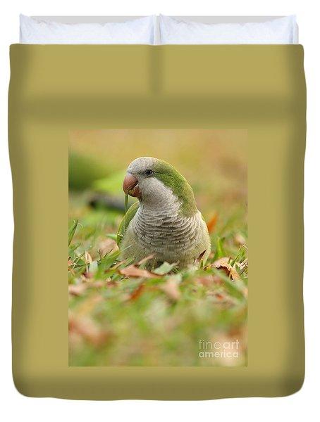 Quaker Parrot #3 Duvet Cover