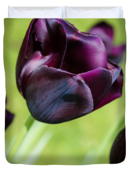 Queen Of The Night Black Tulips Duvet Cover