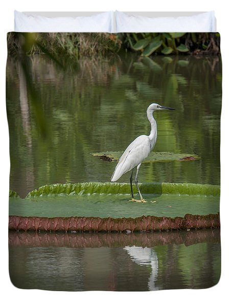 Queen Victoria Water Lily Pad With Little Egret Dthb1618 Duvet Cover