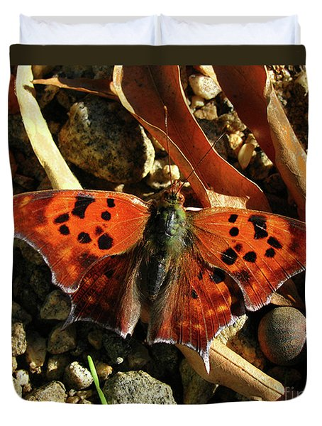 Duvet Cover featuring the photograph Question Mark Butterfly by Donna Brown