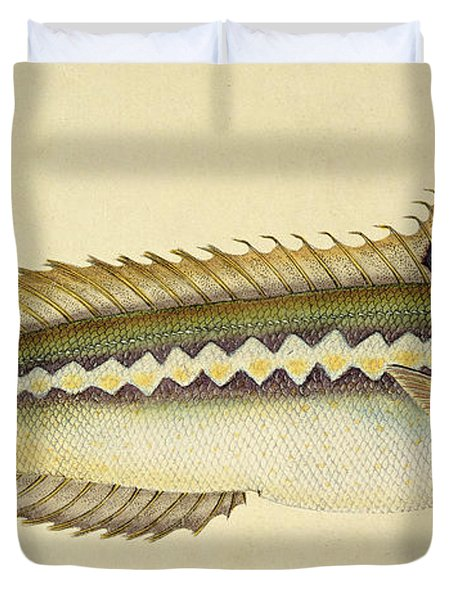 Rainbow Wrasse Duvet Cover by E Donovan and FC and J Rivington