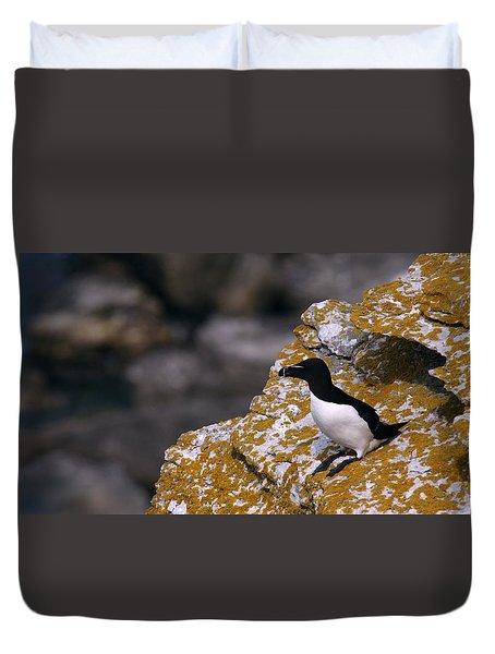Razorbill Bird Duvet Cover by Dreamland Media
