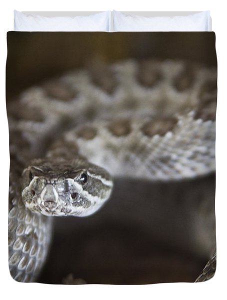 A Rattlesnake Thats Ready To Strike Duvet Cover