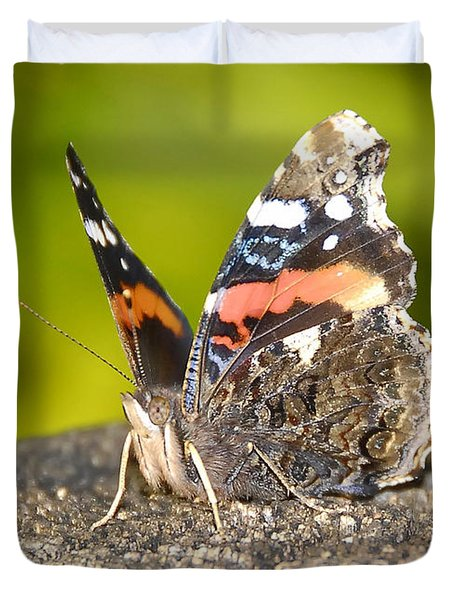 Red Admiral Butterfly Duvet Cover by David Lee Thompson