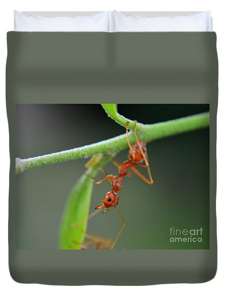 Red Ant Duvet Cover by Michelle Meenawong