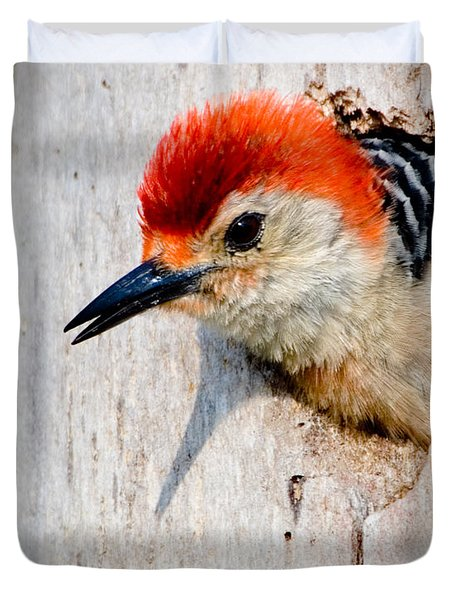 Red-bellied Woodpecker II Duvet Cover