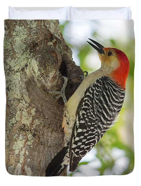 Red-bellied Woodpecker Duvet Cover by John M Bailey